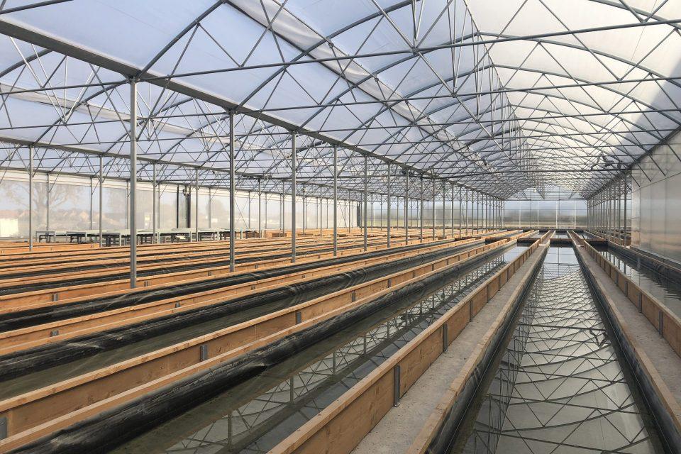 L'aquaponie, une agriculture en collaboration avec les poissons